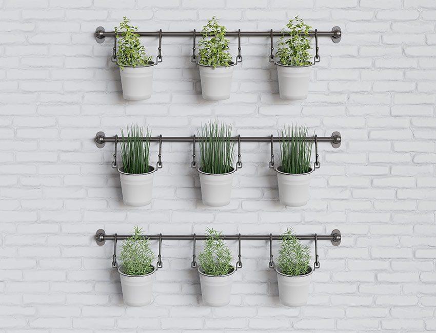 mur plantes aromatiques