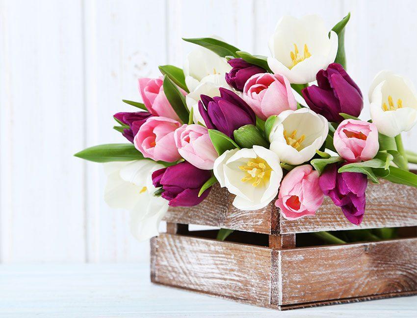 tulipes caisse bois
