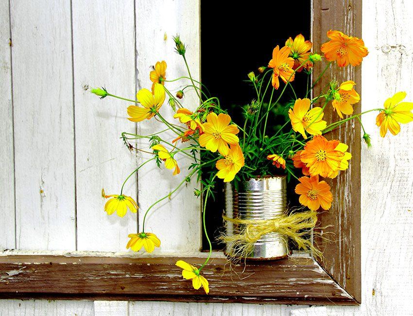 conserve recyclée pot de plante