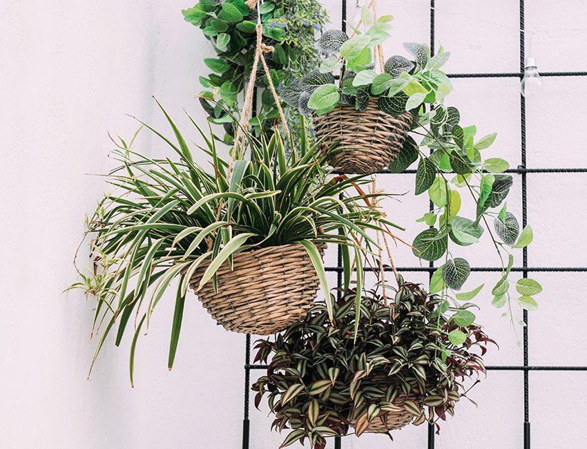 paniers en osier plantes jardiniere