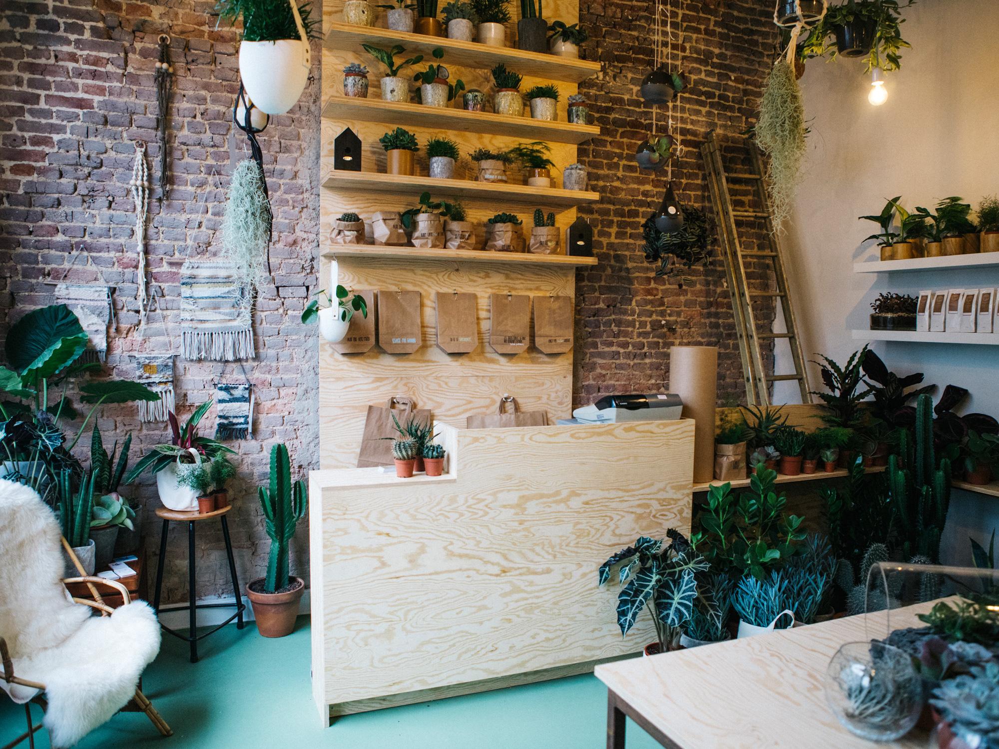 Agave la boutique ode aux belles plantes d co id es for Idee boutique a ouvrir