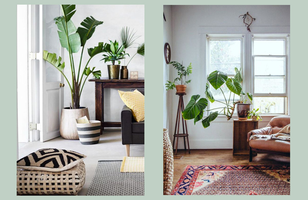 Plantes-ban2