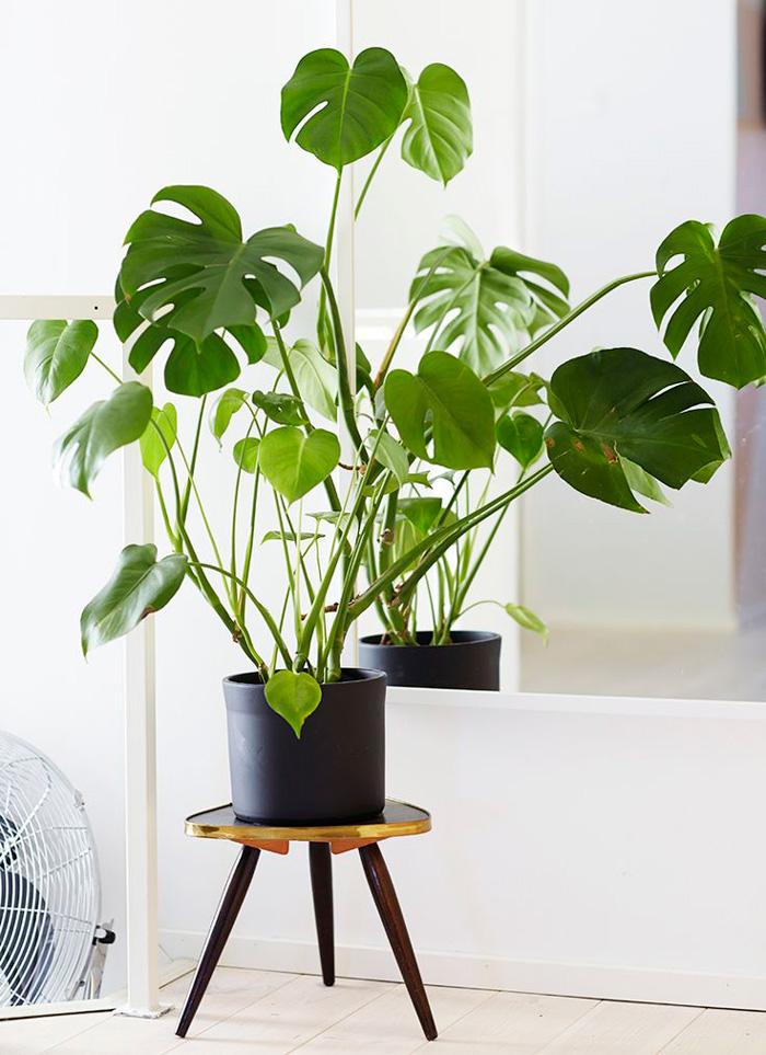plantes-2