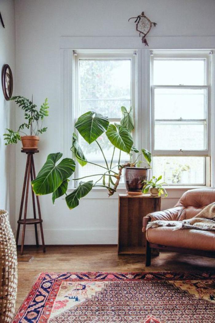 plantes-4