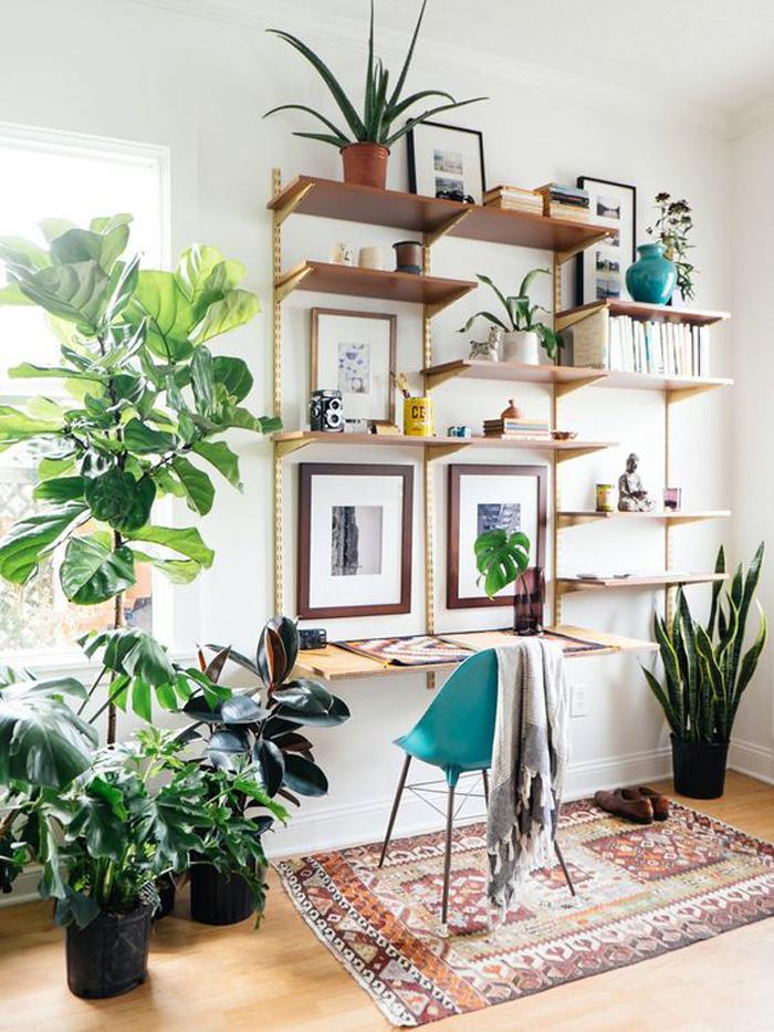 plantes-6