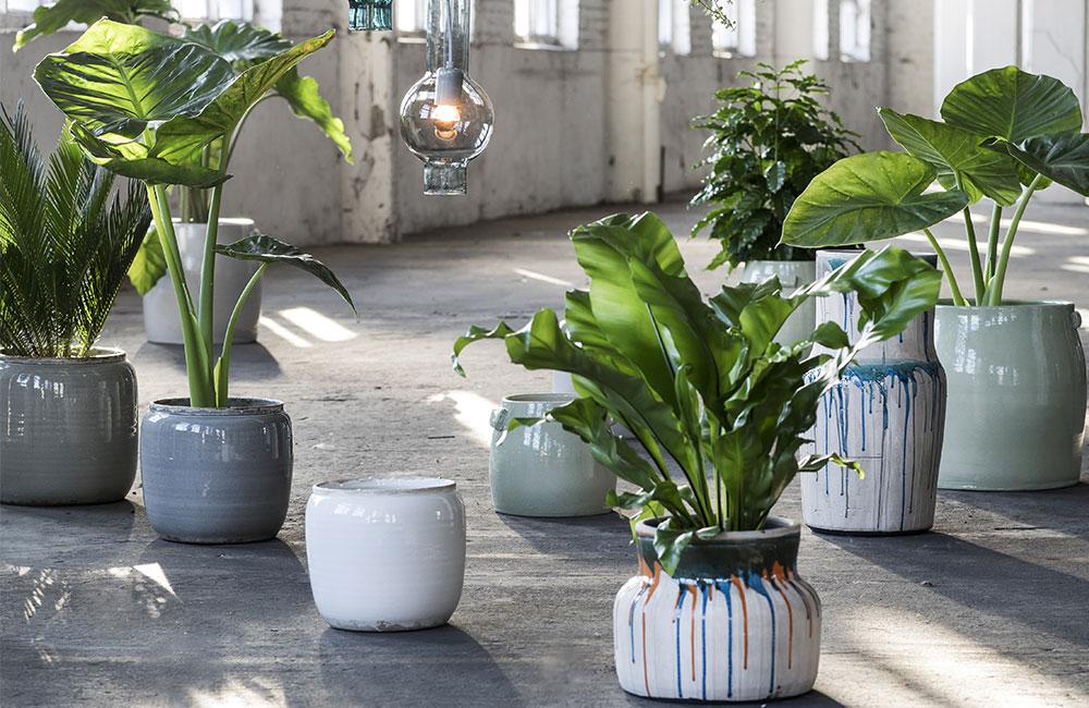Quelles sont les 5 plantes d'intérieur tendance?