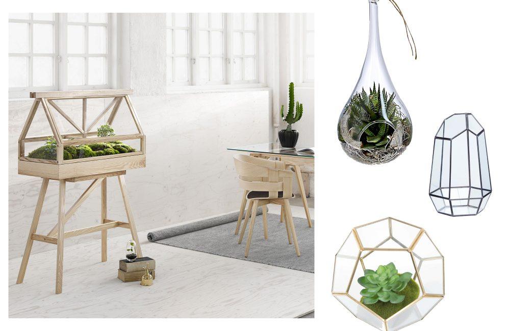 o trouver des mini serres d co id es. Black Bedroom Furniture Sets. Home Design Ideas