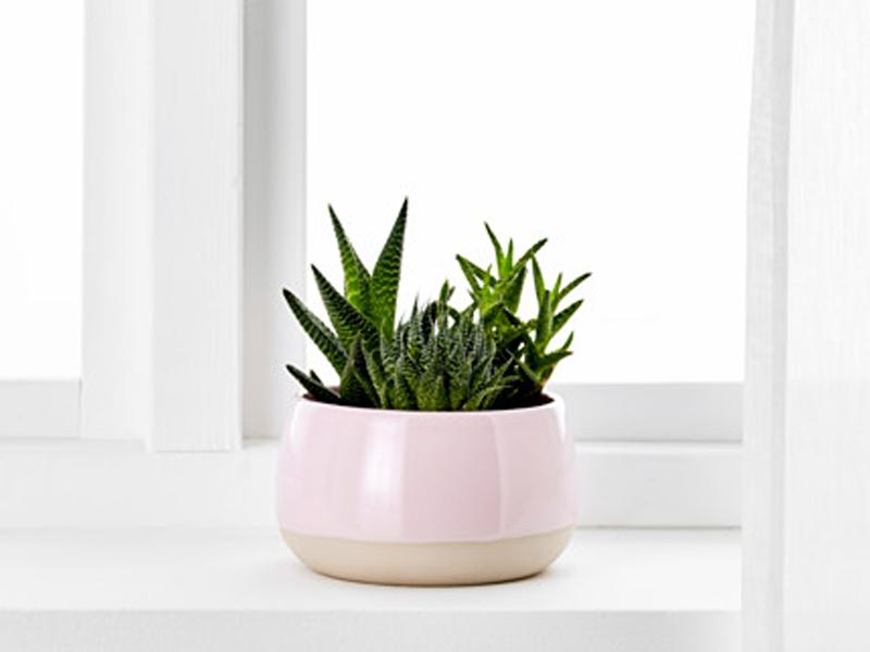 succulentpotikea