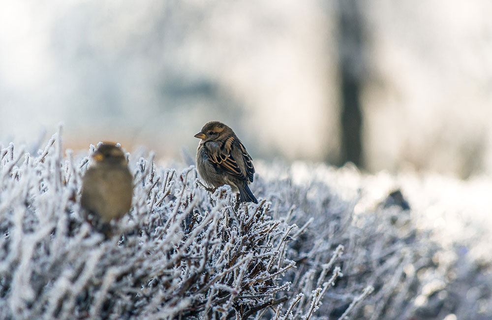 Nos bonnes astuces pour protéger les oiseaux en hiver