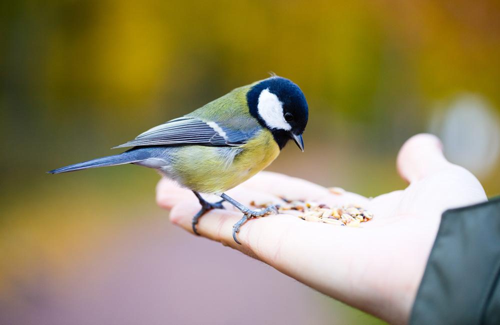 N'oubliez pas les oiseaux cet été