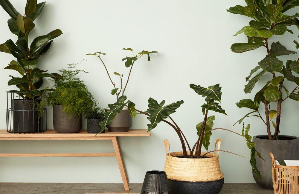 Quelle plante verte pour quelle pièce?