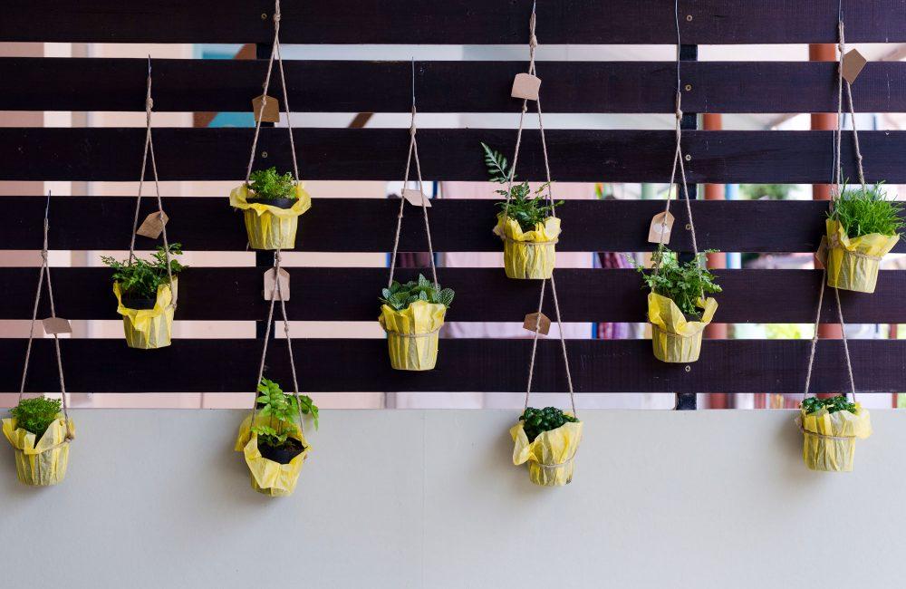Comment cultiver des légumes sur un balcon?