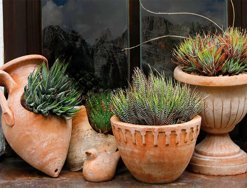 pot terre cuite plantes vertes