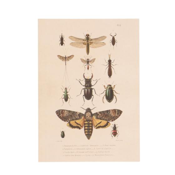 Carte postale insectes en papier recyclé