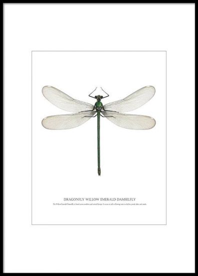 Poster 'Dragonfly White'