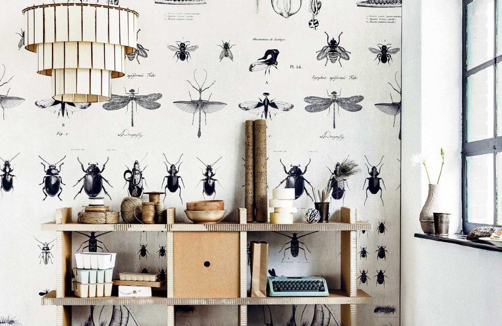 Tendance cabinet de curiosité : des insectes dans la déco