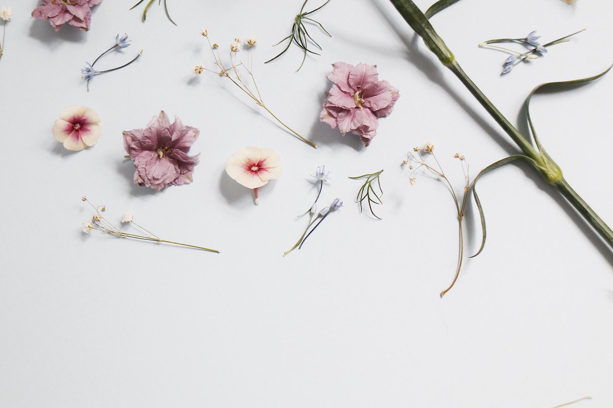 Comment Conserver Des Fleurs Séchées comment adopter la tendance fleurs séchées ? - déco idées