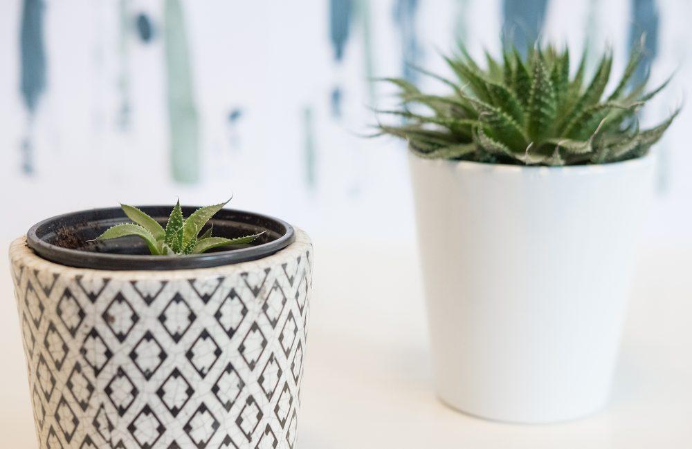 Comment bouturer les plantes vertes les plus tendance?