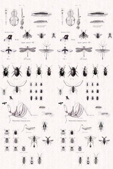 Papier peint Insectes