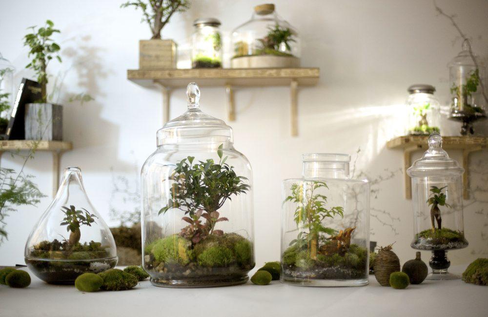 4 questions à La Fleurerie sur la tendance terrarium