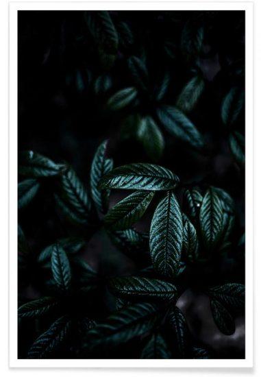 Affiche 'Dark Leaves 6', design Mareike Böhmer (à partir de 13 x 18 cm), Juniqe, à partir de 6,99€