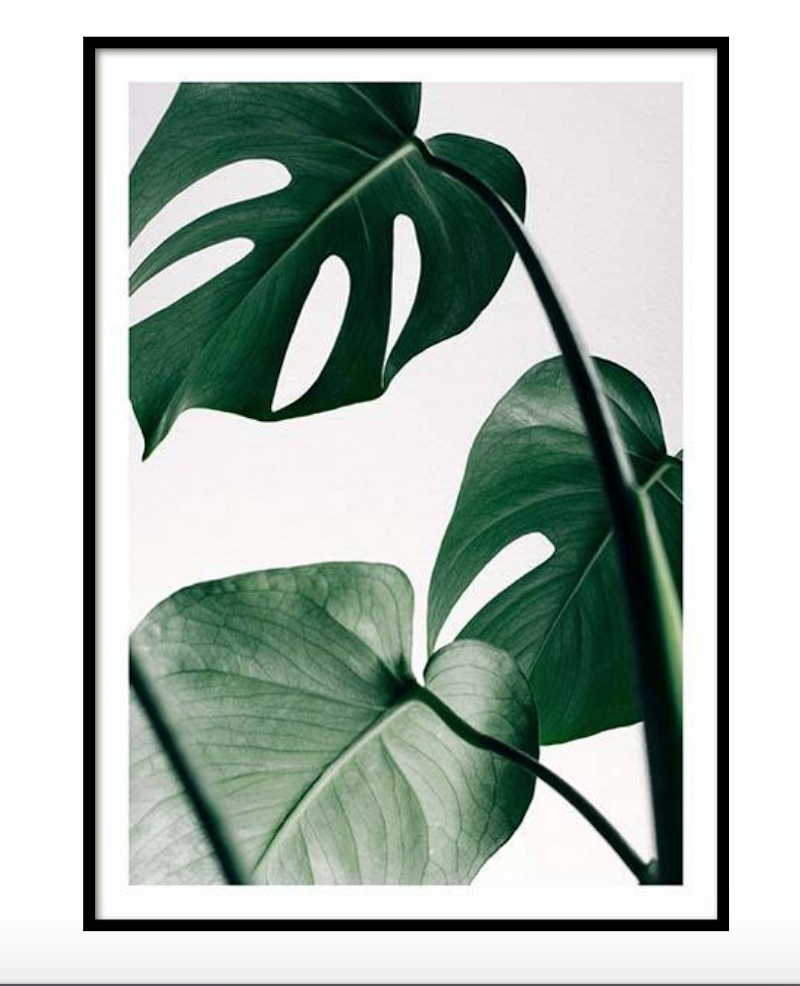 affiche vegetale