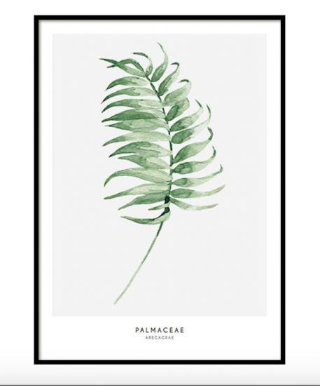 Affiche 'Palmaceae' (à partir de 20 x 30 cm), Desenio, à partir de 7,95€