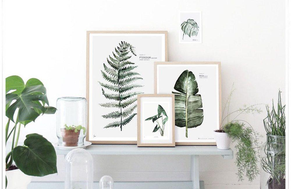 10 affiches végétales pour les amoureux des plantes