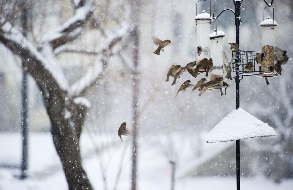 Comment aider les oiseaux avec l'arrivée du froid ?