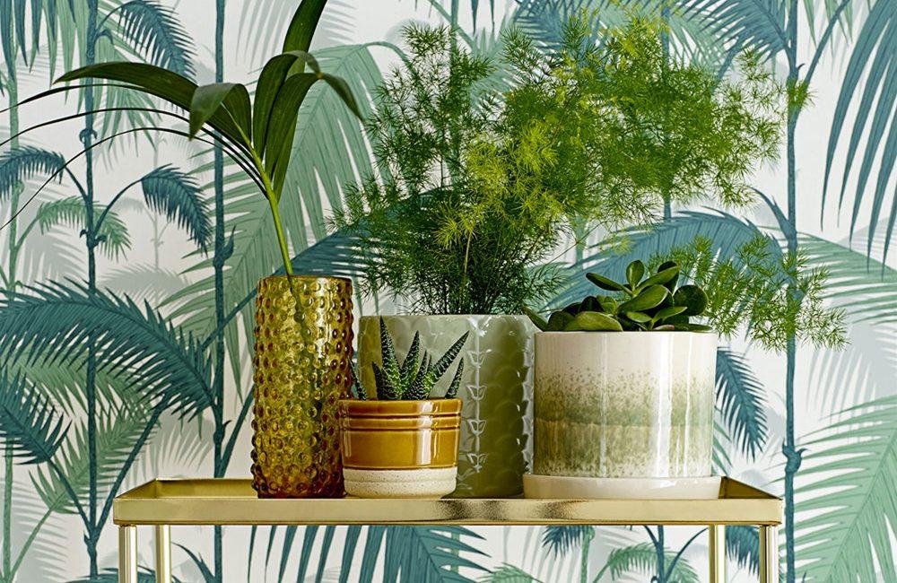 10 cache-pots pour sublimer nos plantes d'intérieur
