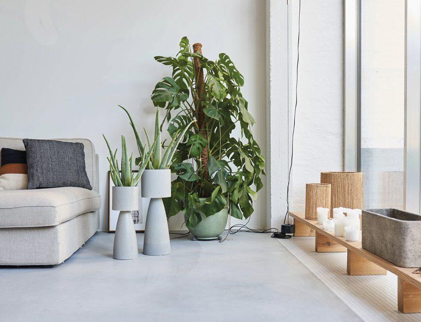 plante intérieur qualité air
